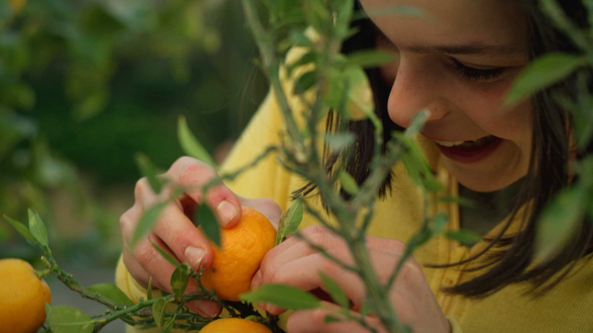 Dove finiscono i mandarini | K+