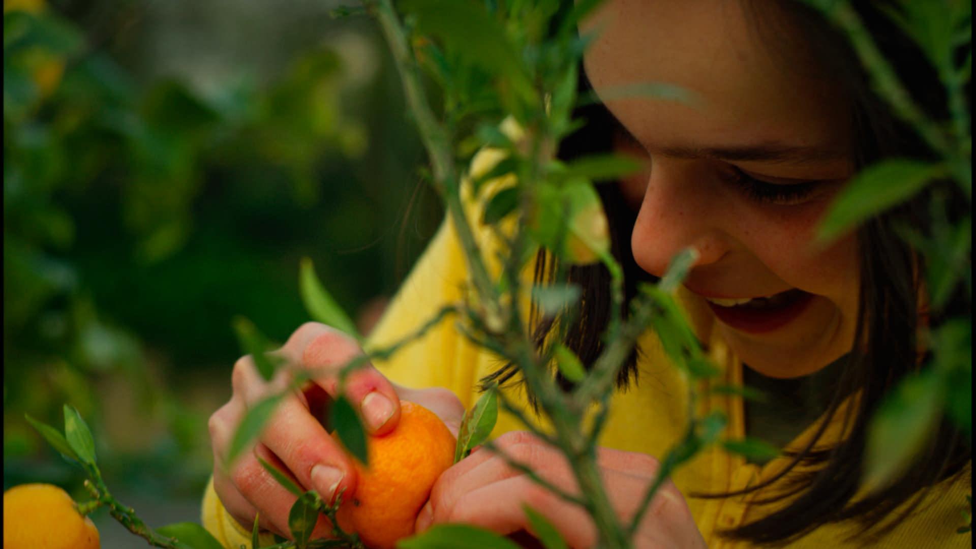 Dove finiscono i mandarini